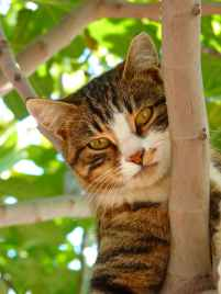 cat-sweet-climb-tree-65239.jpeg