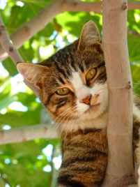 cat-sweet-climb-tree-65239.jpeg